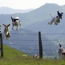 Flying dogs.  Loving every minute of it