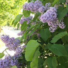 Plants, Beautiful, Instagram, Planters, Plant, Planting
