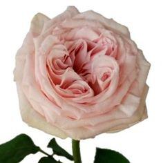 Classic Navy Blush Wedding On Pinterest Spray Roses