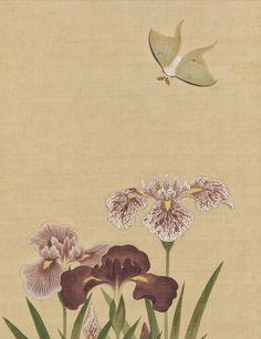Detail. Suzuki Kiitsu   Irises and Moth   Japan   Edo period (1615–1868)   The Met