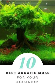 This is what 10 Best Aquatic Moss For Your Aquarium you need to know #plantedtank #aquascape #Exoticaquaristic