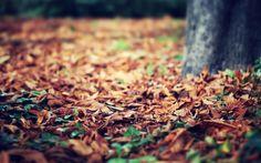 Mac Backgrounds HD Fall | macro-leaves-fall-autumn-tree-nature-wallpaper-53cac121e10e5.jpg