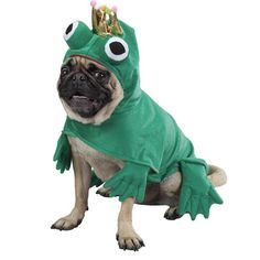 Frog Dog Halloween Costume by Zack & Zoey