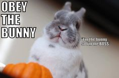 The truth no one would ever believe... until you live with a bunny. Our nickname for our bunny is Marie Buntoinette