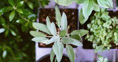 Truco para mantener las plantas hidratadas y bonitas
