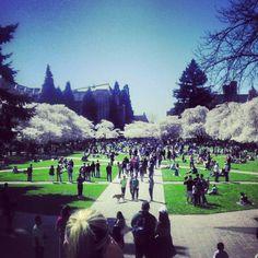 University of Washington Admissions Essay