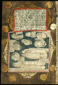 .From Fishbook Adriaen Coenensz Adriaen Coenensz. The richness of an 16-th century enthusiast. The Dutch fish-auctioneer and official beachcomber Adriaen Coenen wrote and painted beautiful hand painted books on marine species.