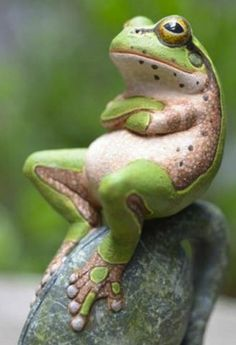 frog on weird rock - Google Search