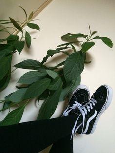 Vans with plants