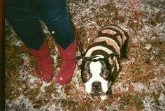 does it get any better than a sassy dog in a knit coat and hot pink cowboy boots? no way.