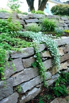 dry stack stone wall with plants over it garden landscaping retaining walls Apartment Therapy Garden Retaining Wall, Landscaping Retaining Walls, Hillside Landscaping, Sloped Garden, Front Yard Landscaping, Garden Beds, Landscaping Ideas, Stone Retaining Wall, Backyard Ideas