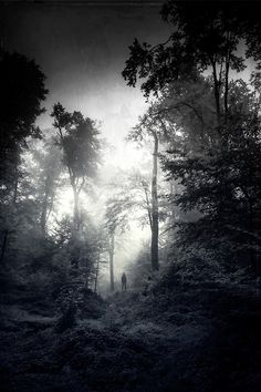 Dirk Wuestenhagen Imagery black and white ~ LakeTyeDye says: how eerie is this photo? Landscape Photography, Portrait Photography, Nature Photography, Photography Ideas, Black White Photos, Black And White Photography, Misty Forest, Foto Art, Jolie Photo