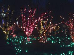 beautiful lights Different Seasons, Beautiful Lights, Botanical Gardens, Places To See, Lighting, Lights, Lightning