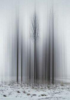 Ellen Jantzen #trees #imeshmktg   visit www.i-mesh.eu and click I LIKE on FACEBOOK: https://www.facebook.com/pages/I-MESH/633220033370693