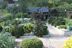 Kitchen garden | jardin potager | Terttu ja Pekka Montosen puutarha