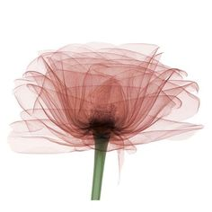 Bryan Whitney's X-ray artwork reveals the inner beauty of flowers and everyday objects. Description from pinterest.com. I searched for this on bing.com/images