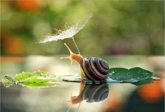 Snail beauty - The introvert in me has a lot of time for snails.