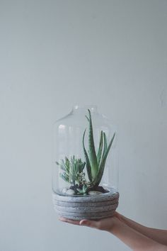 DIY succulent terrarium / a daily something