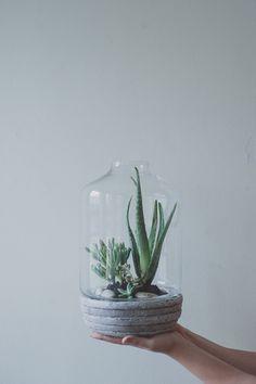 DIY: succulent terrarium / a daily something