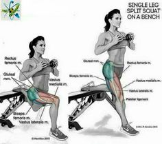Fitness Anatomy for - Single-leg Split Squats on a Bench. Body Fitness, Fitness Tips, Fitness Motivation, Health Fitness, Butt Workout, Gym Workouts, At Home Workouts, Workout Tips, Thigh Exercises