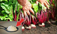 Asparagus, Vegetables, Kitchen, Youtube, Plant, Studs, Cooking, Kitchens, Vegetable Recipes