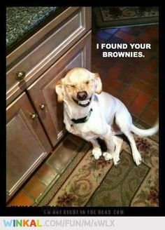 I found your brownies.... pffhahahahha!!
