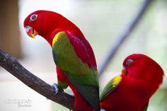 # Park of birds # by Bedenko Grigoriy on 500px