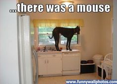 Image detail for -Great Dane | Funny Wall Photos