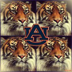 Tiger Pride...