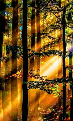 Forest in the sunshine !!! - Ted S - Google+