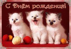 Cats, Gif 2, Birthday, Animals, Gatos, Kitty Cats, Animaux, Birthdays, Animal