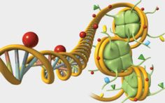 What are epigenetic modifications, and how might they play out across generations?