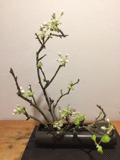 Apfelblüte  Sogetsu, aufrechter Grundstil