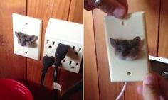 How on earth did you get in there? Man discovered RAT sticking its head out of a plug socket | Daily Mail Online