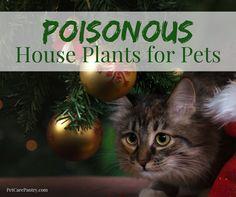 Poisonous House Plants for Pets
