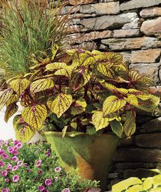 Coleus | If tending to your flora is leaving you feeling wilted, take heart: These plants are almost impossible to kill.