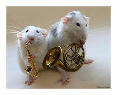 Ratten sind auch nur Menschen (Ellen van Deelen ...