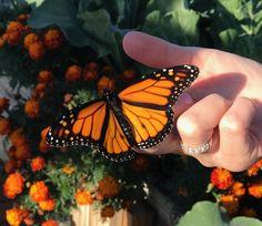 Orange Aesthetic, Summer Aesthetic, Aesthetic Photo, Aesthetic Pictures, Aesthetic Art, Types Of Butterflies, Beautiful Butterflies, Butterfly Wallpaper, Spirit Animal
