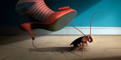 How to Get Rid of Roaches Permanently (Fast and Naturally)