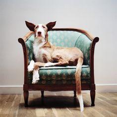 傷つけられ、捨てられていった、誇り高き猟犬たちが第二の人生を与えられた時
