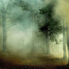 Beautiful misty woods