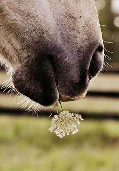 All animals love pretty flowers