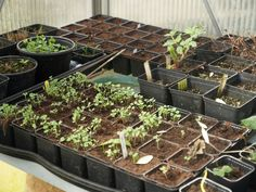 Mixed lettuce, pak choi, asparagus - and a few perennials. Haven't sown much this spring. Yet... March 27th 2016