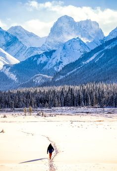 Moose Meadows and Mount Engadine. Two week road trip itinerary around the Canadian Rockies Canadian Forest, Canadian Rockies, Yoho National Park, National Parks, Perfect Road Trip, Forest Photography, Western Canada, Round Trip, Trip Planning