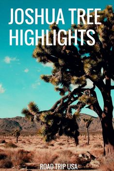 Joshua Tree National Park Highlight's. The best things to see in Joshua Tree National Park --> One day travel itinerary Most Visited National Parks, Us National Parks, Family Road Trips, Road Trip Usa, Joshua Tree National Park, Road Trip Hacks, Amazing Destinations, Travel Destinations, Travel Usa