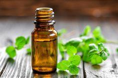 Découvrez certains remèdes naturels qui peuvent aider à contrôler les symptômes de la sinusite, cette affection commune qui provoque des difficultés pour respirer.