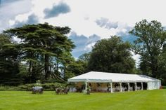 Stunning wedding marquee dwarfed by the magnificent cypress trees - Spetchley Park Gardens