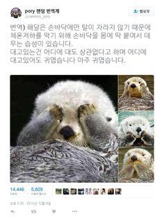 해달이 귀여운 이유 : 네이버 블로그 Funny Fat Animals, Animals And Pets, Baby Animals, Cute Animals, Wild Animals Pictures, Animal Pictures, Baby Sea Otters, Life Is An Adventure, Cute Characters