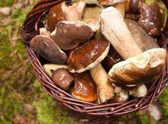 Les champignons suivants sont considérés par les gastronomes comme les plus fins en cuisine. Tout dépend de vos goûts : d'autres espèces sont aussi très intéressantes mais ne se trouvent qu'avec l'expérience… et un bon guide d'identification en main !