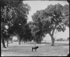 Detroit Publishing Co., Publisher, Jackson, William Henry, photographer. [Calle de Guadeloupe i.e. Guadaloupe, Chihuahua]. [1891] Image. Retrieved from the Library of Congress, https://www.loc.gov/item/det1994024750/PP. (Accessed July 04, 2016.). Courtesy: Library of Congress Prints and Photographs Division Washington, D.C. (USA).